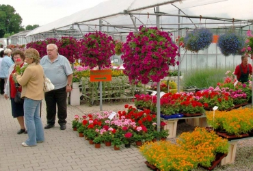 Blumenpracht auf dem Ostelbischen Bauernmarkt
