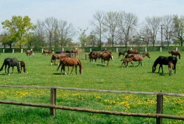 Pferdekoppeln in Graditz
